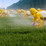 You're Not Gluten Intolerant, You're Glyphosate Intolerant