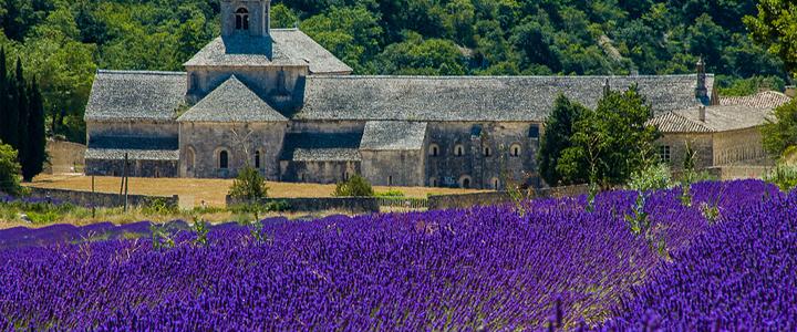 Lavender-fields-near-Gordes-in-france